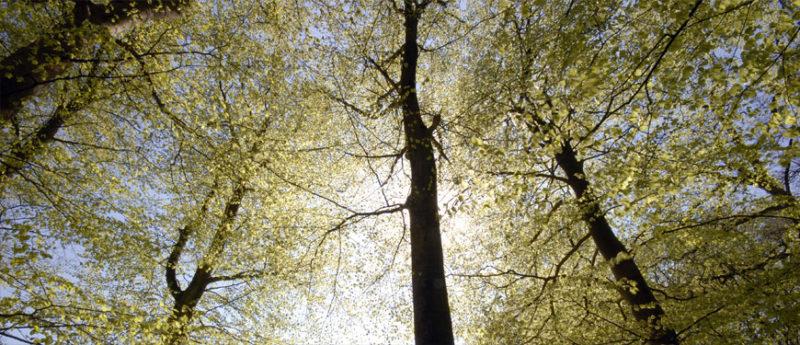 Aurinkoinen, lehteen puhkeava metsä